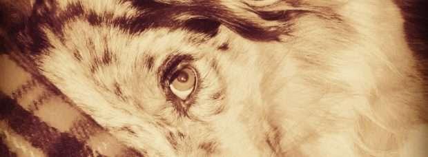 cane amore love cucciolo