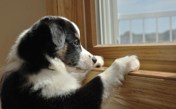 cane casa solo
