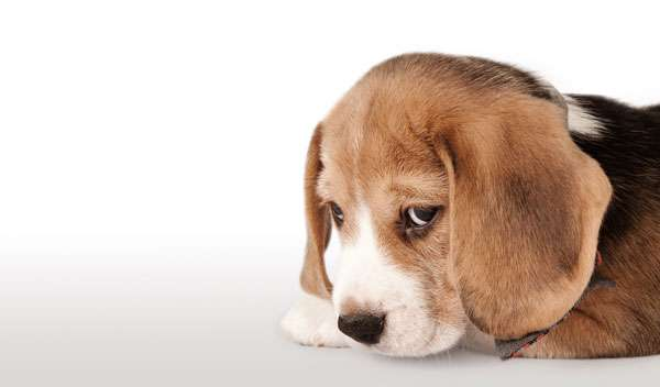 quante ore cane solo casa