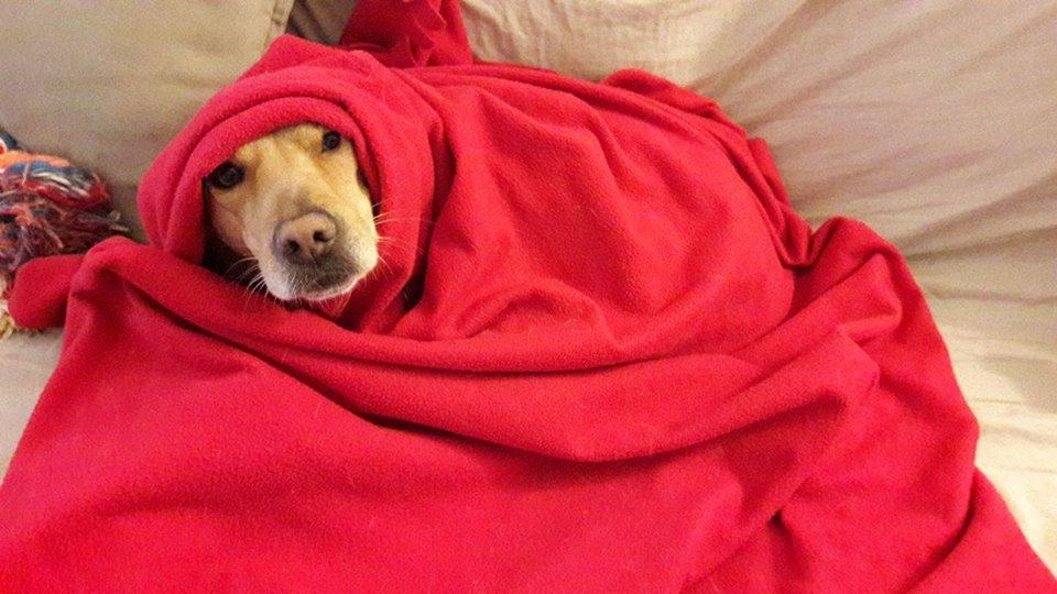 Cani sul divano - Lily