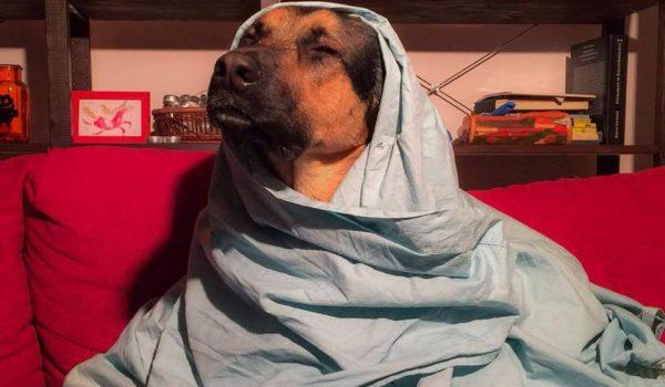 cane divano