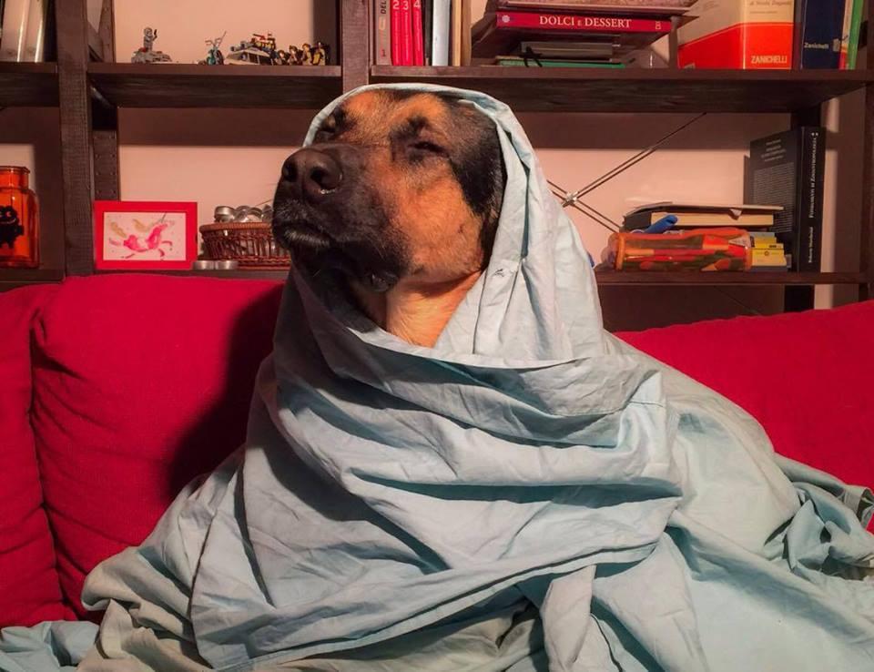 Cani sul divano - Argo