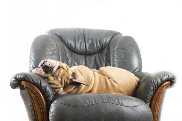 cane divano agility