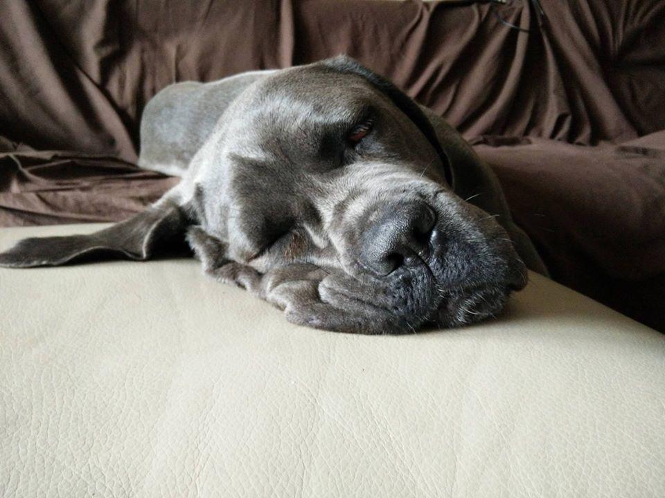 Cani sul divano - Kira