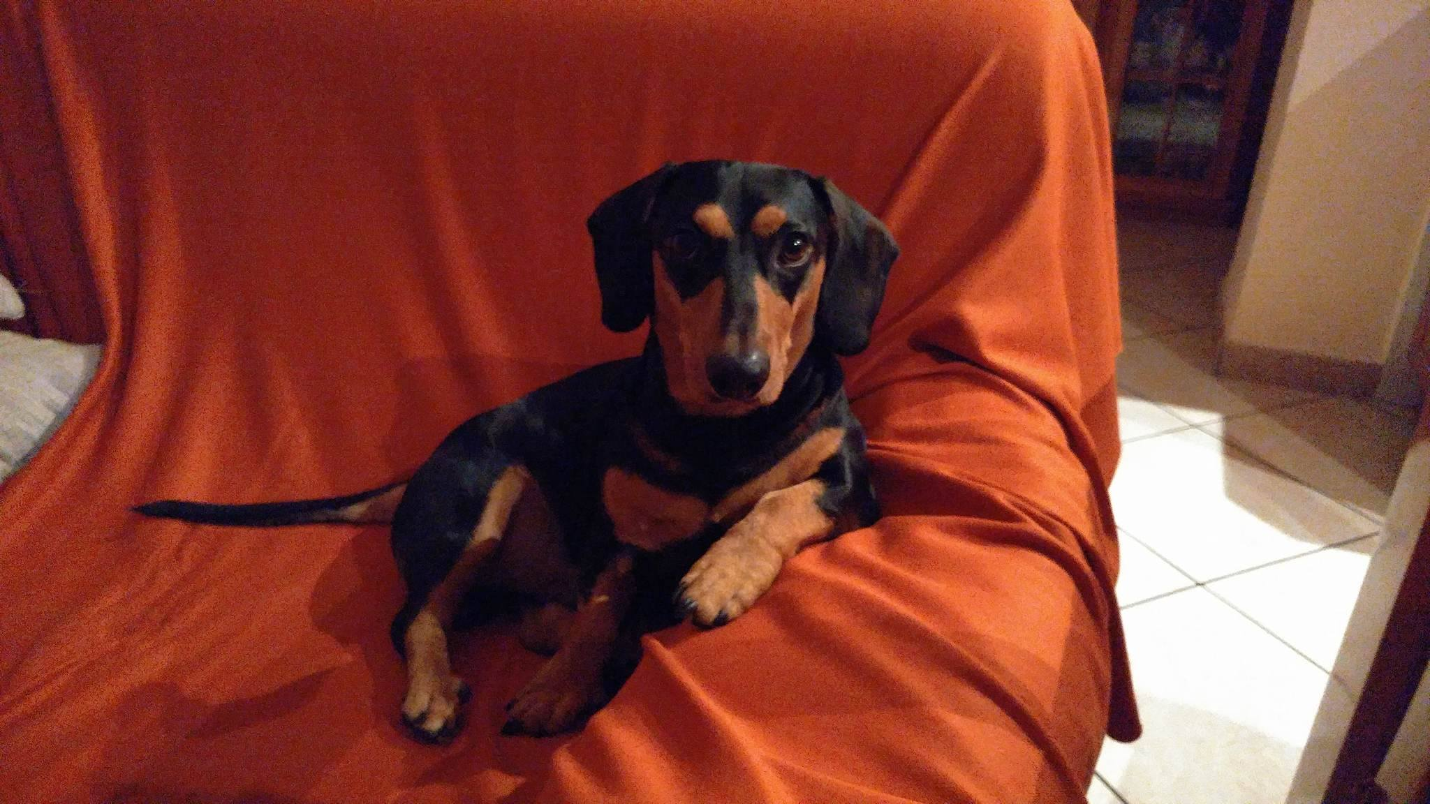 Cani sul divano - Meeko