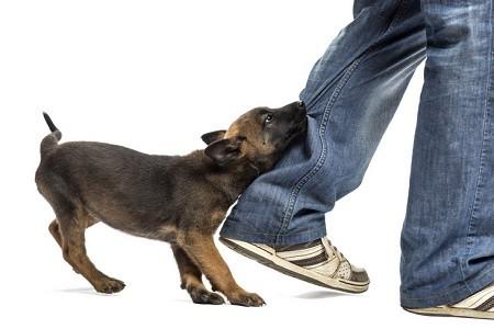 cucciolo cane morde piedi