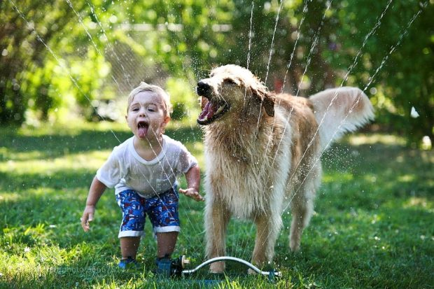 razze cani bambini migliori adatte