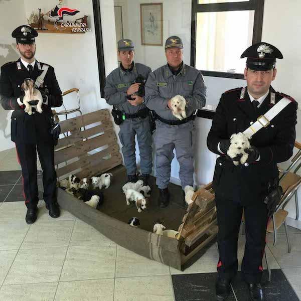 cuccioli cani carabinieri