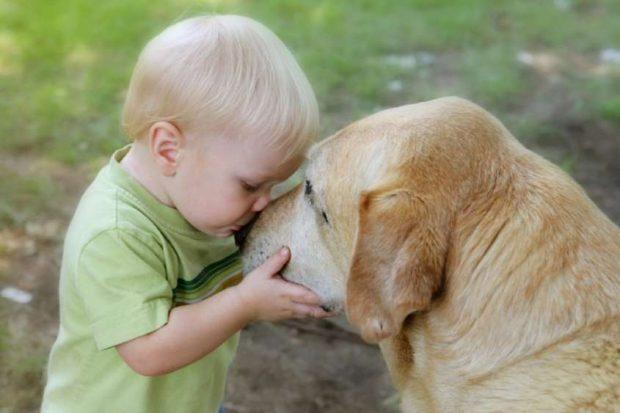 cane bambino bacio