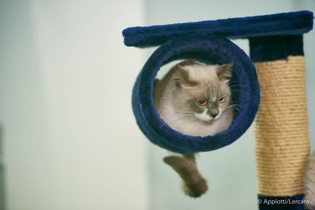 aTuttaCoda fiera gatti