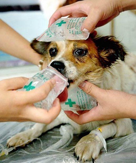 cane colpo di calore