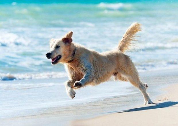 cane corre spiaggia mare