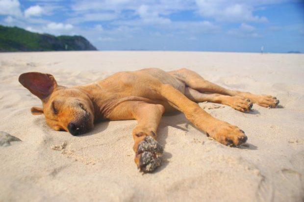cane dorme spiaggia