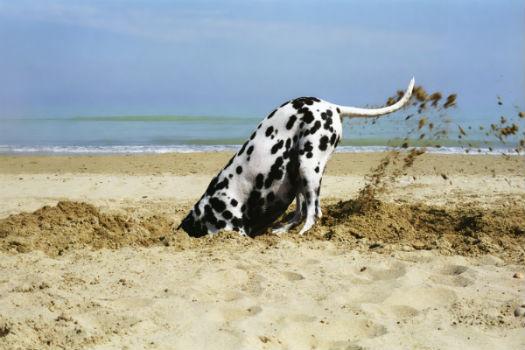 cane scava buca spiaggia