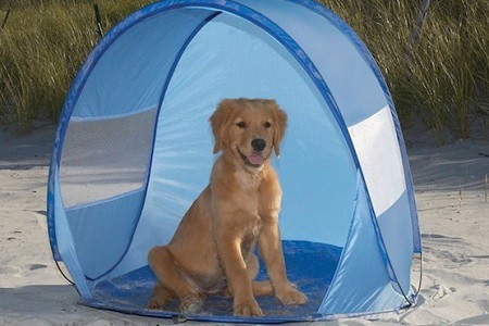 cane tenda spiaggia