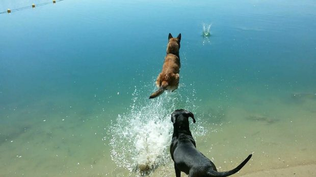 spiaggia cani lombardia