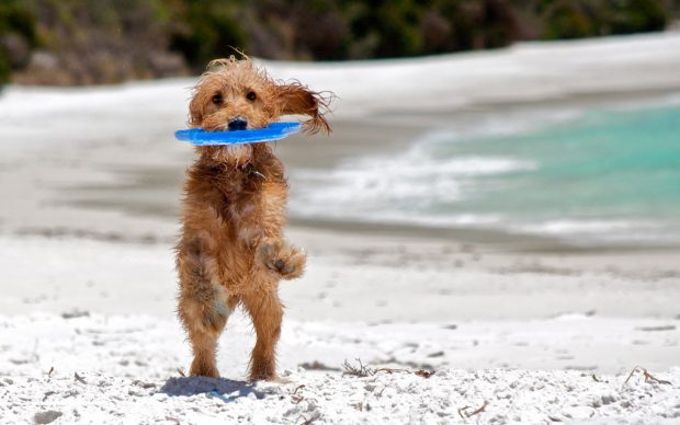 spiaggia cane italia