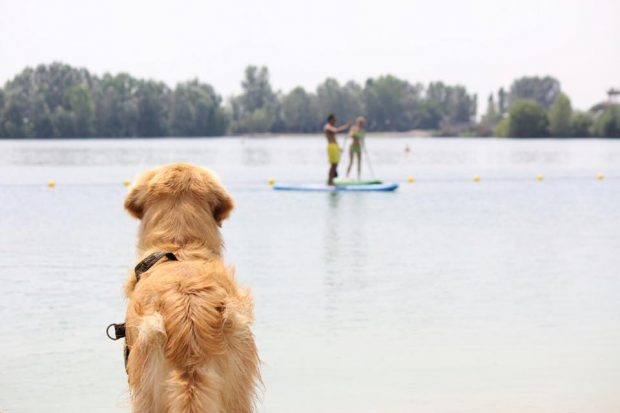 spiagge cani lombardia