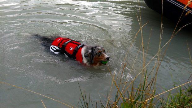 cane bagno lago montagna petvillage 4