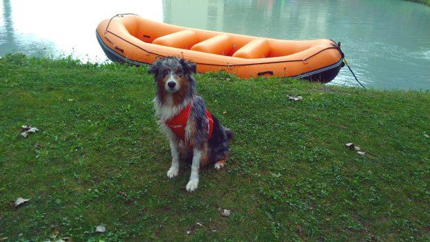 cane bagno lago montagna petvillage