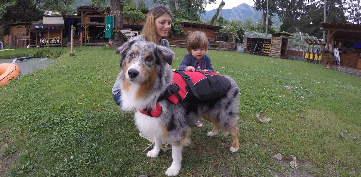 Cani in acqua mare e lago con giubbotto e canottiera - Bagno cane dopo antipulci ...