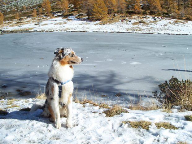 cane in vacanza montagna