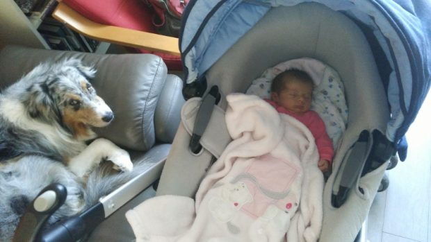 cane neonato carrozzina