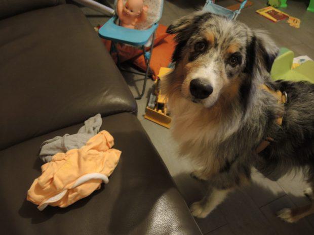 cane vestiti neonato