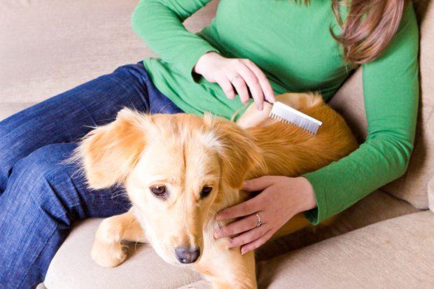 cane pulci zecche antiparassitario