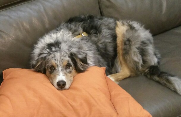 cane divano diabete