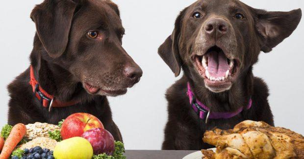 cane diabete alimentazione