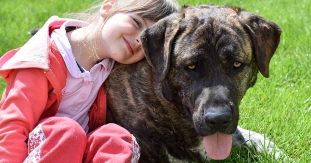 cane grande bambina contatto