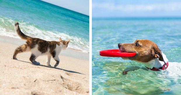 cani e gatti vacanza