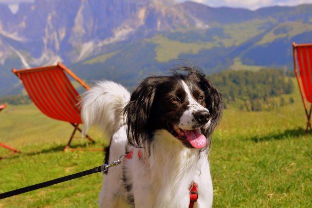 cane felice montagna
