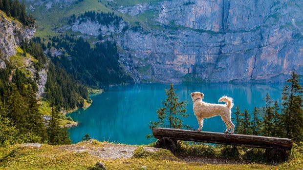 cane lago montagna