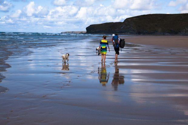 cane mare spiaggia