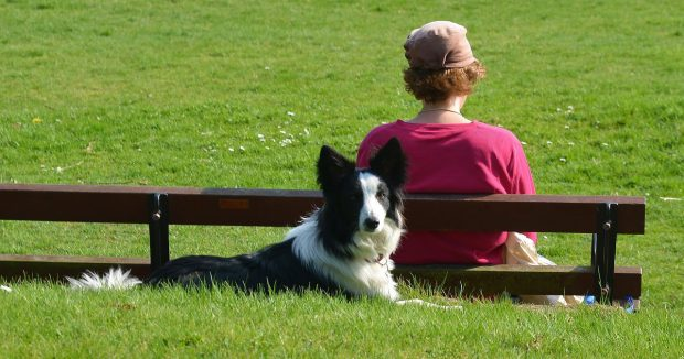 border-collie-cane-relax