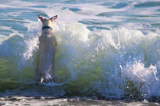 cane acqua mare