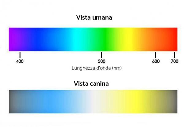 vista cane uomo colori