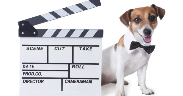 cani e gatti cinema
