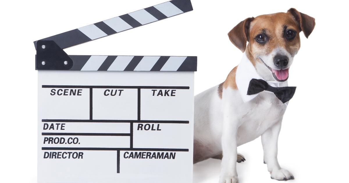 Cani E Gatti Famosi I Pet Al Cinema E Nei Fumetti Irenesofiait