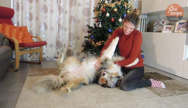lotta cane regali natale monge