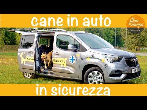 Come-trasportare-il-cane-in-auto-in-sicurezza-Qua-la-Zampa