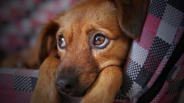 cane divano stress