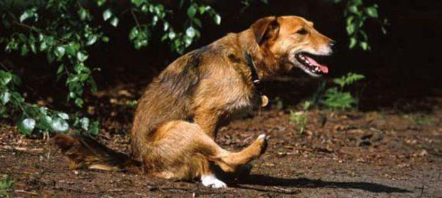 cane-striscia-sedere-per-terra