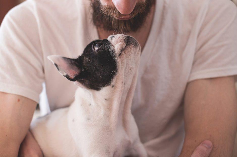 cane che guarda il proprietario
