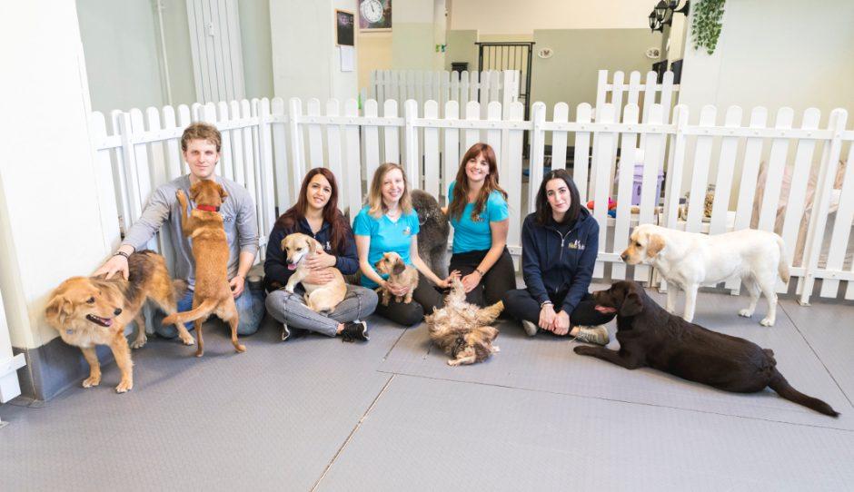 cani e persone asilo recinti