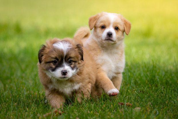 cuccioli socializzare