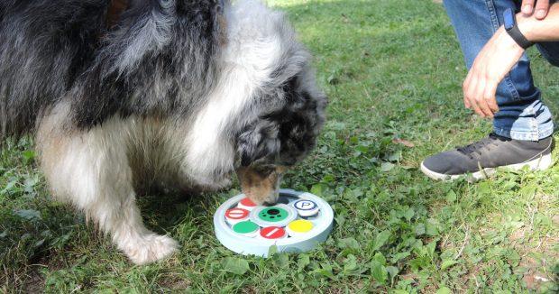 attivazione mentale cane pastore ausraliano