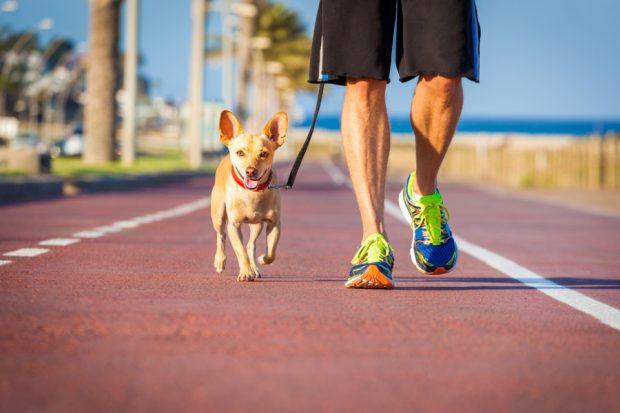 cane e proprietario che corrono